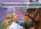 How to Maintain Your Horse Health in Winter
