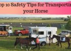 Top 10 Safety Tips for Transporting your Horse